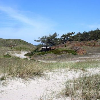 Young professionals training in de duinen